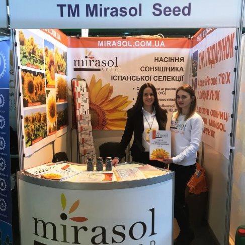 Семена подсолнечника Мирасол (Mirasol Seed)